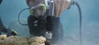 mollica scuba core200